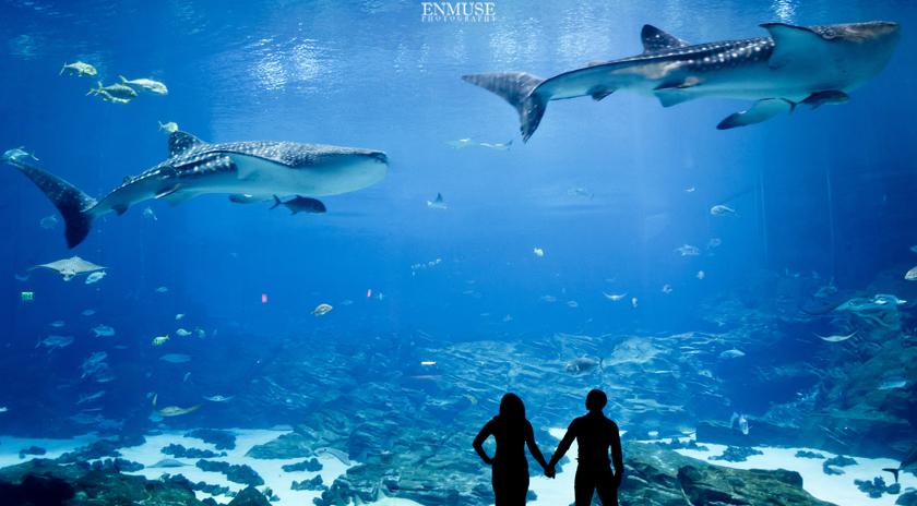 06 Georgia Aquarium Wedding Photography 480